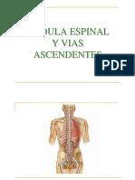 3medula espinal3