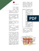 Fisiologia da pele