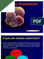 Células Estaminais - 4