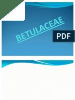 BRASSICACEAE Y BETULACEAE
