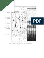 Corrtex PDF