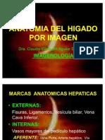 Anatomia Del Higado Por Imagen