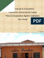 Consorcio Oro Verde - Cacao - San Martin