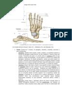 tema 5 anatomia