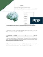 Actividad Organizacion Cerebral (1)