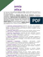 Anatomia_Sistematica