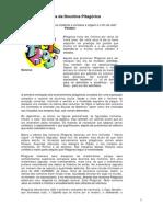 Jose Laercio do Egito - artigo FRC - Aspectos da Doutrina Pitagórica