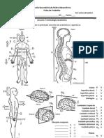 FT - terminologia anatómica