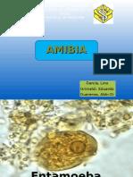 Amibiasis, Amibas de vida Libre y Blastocystis hominis.