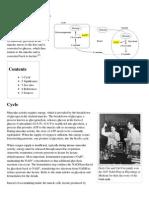Cori Cycle - Wikipedia, The Free Encyclopedia
