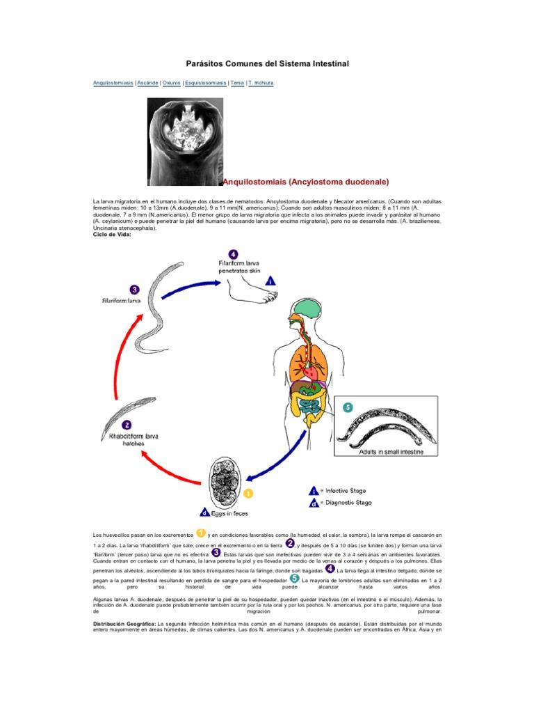 parásitos comunes encontrados en humanos