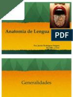 Anatomia de Lengua