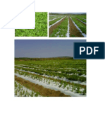 La Stevia Un Cultivo Con Amplio Mercado
