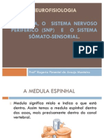 4ª aula A MEDULA, o  Sistema Nervoso Periférico