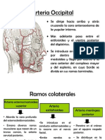 Auricular Posterior
