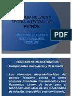 Anat Pp Petros JOP
