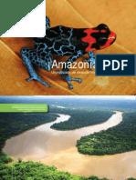 Amazon Alive