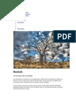 Cuentos y leyendas de árboles