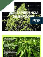 Microsoft Power Point - EnFOCANDO_EL_ARBOL-1 [Modo de ad