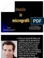 Insecte in Micrografii