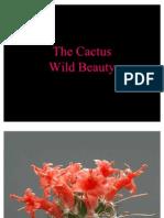 Cactus Beauty in Bloom