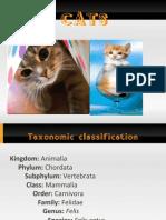 Cat Report v.2