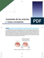 Anatomía de las venas y arterias coronarias