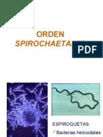 Tema Diapositivas Orden Spirochaetales