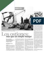 ostiones_ensayo