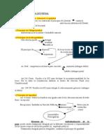 Caracteres de La Ley Penal (1)