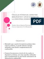 Células fúngicas