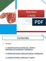Anatomia del miembro superior
