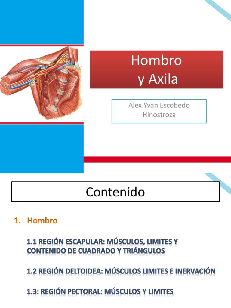 Anatomia del miembro superior: Hombro y axila