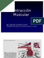 C. Contraccion Muscular