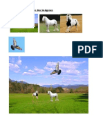 Montaje de dos imágenes