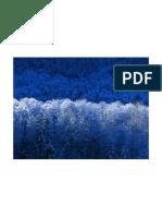 Experimento PDF