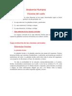 Anatomía Humana-Visceras del cuello (1)