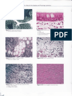 Histology Images