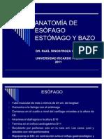 Anatomia de Esofago Estomago y Bazo