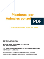 INTOXICACION POR  ANIMALES  PONZOÑOS