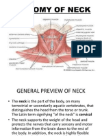 Anatomy of Neck