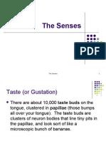 The Senses[1]