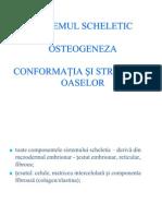 Curs 2 Osteogeneza