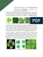 Del verde Trébol de IV hojas a la proyección estereográfica Moebiüs
