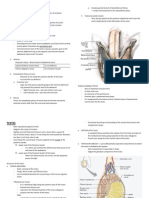 Anatomy Jan11 Spermatic Cord