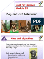 B5 Dog and Cat Behaviour