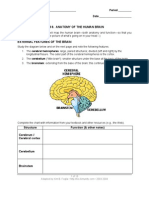08 Lab Brain Anatomy