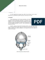 Huesos de La Cabez1
