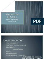 Ovejas Produccion Carne