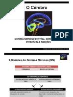 43805335-O-Cerebro-I
